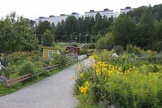 Koloniträdgård