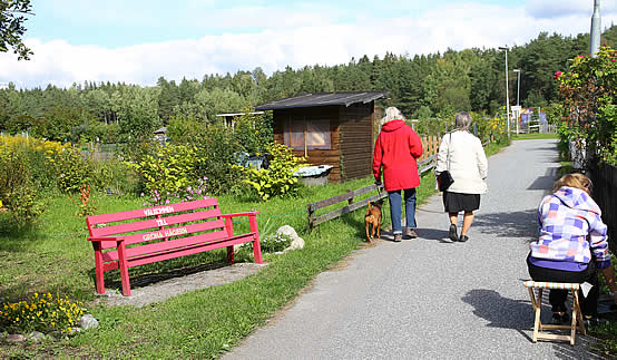 En av promenadvägarna genom koloniträdgården
